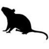 mouse-black-logo