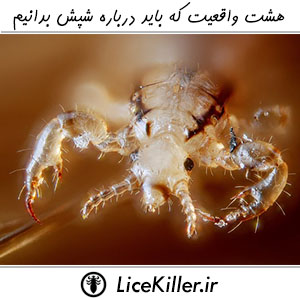 Eight Fact About Lice And Louse