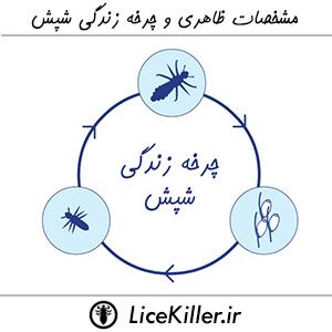 مشخصات ظاهری و چرخه زندگی شپش