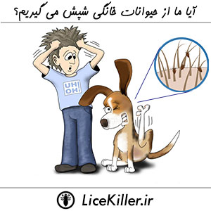Can You Get Lice From Your Pet