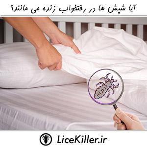 آیا شپش ها در رختخواب زنده می مانند؟